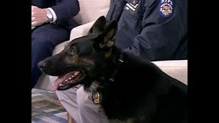 How NYPD Counter-terrorism Dog Detects Crime
