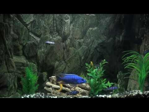 Aquarium 20min video