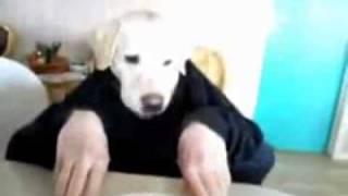 Прикол с собакой