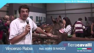 Intervista a Vincenzo Rabia, Ass  ASINI SI NASCE Verona cavalli 2012