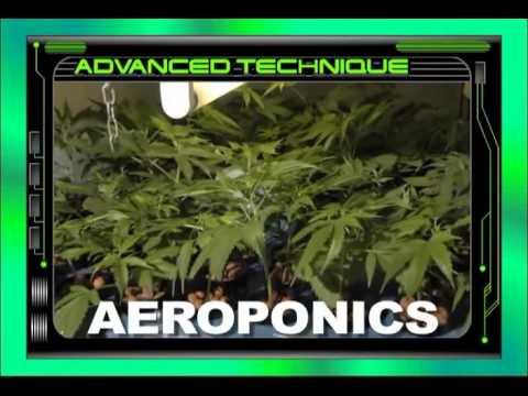 Jorge Cervantes Ultimate Marijuana Grow Guide Full