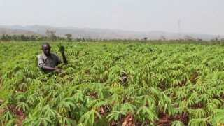 Regional Cassava Initiative: Upholding cassava's potential in Africa (Long Version)