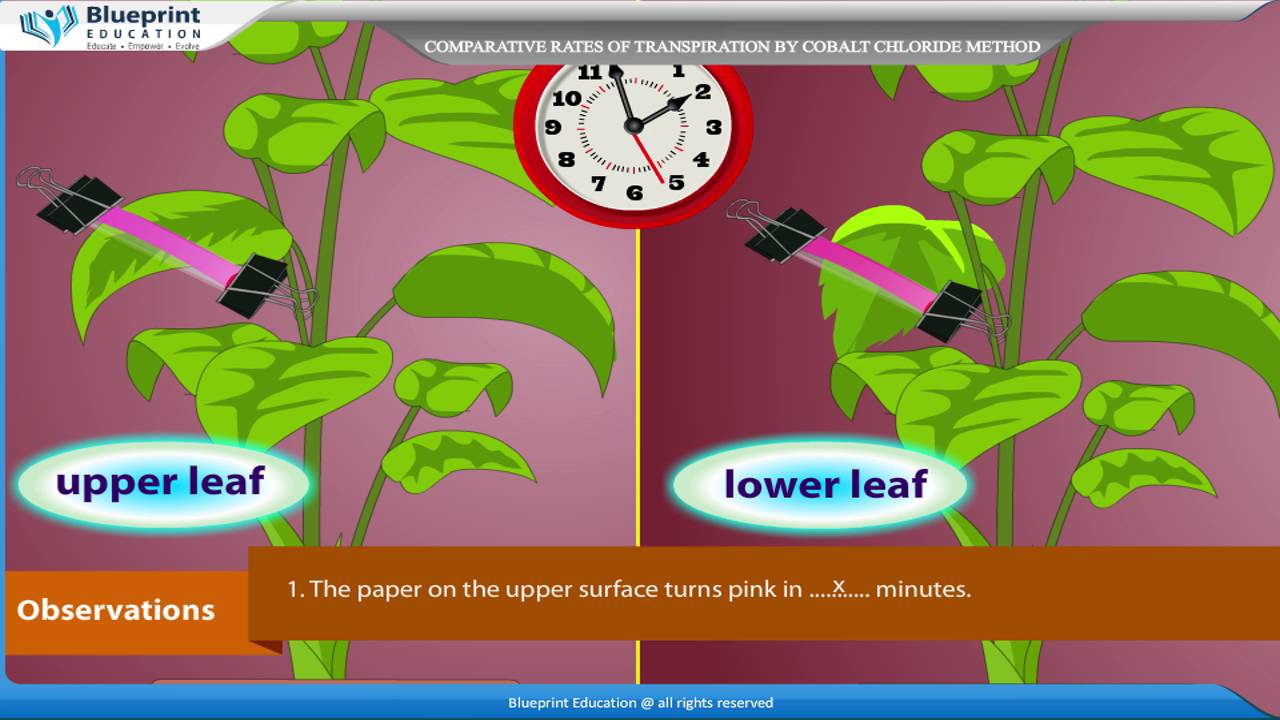 the rate of transpiration