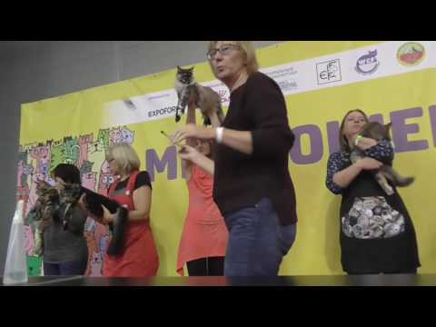 CATS WORLD 2016  Maine Coon Breed Show