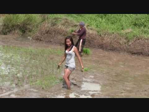 FILIPINA BEAUTIES PLANTING IN THE RICEFIELD EXPATA PHILIPPINES LIFESTYLE VIDEO