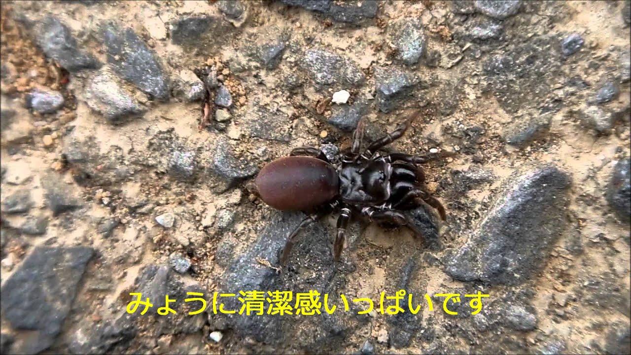おもしろ科学実験 観察 ジグモを...