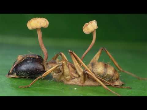 Как бороться с грибами паразитами