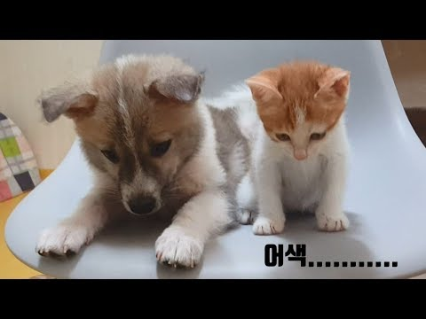 When 'an Abandoned DOG' met 'an Abandoned CAT' at first time.... [rescue cat, kitten, dog adoption]