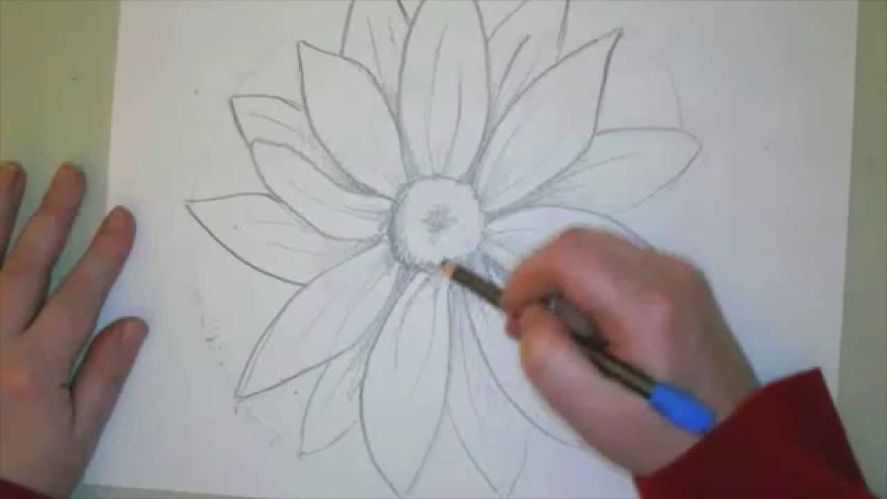 Daisy Flower Line Drawing : Draw a daisy youtube