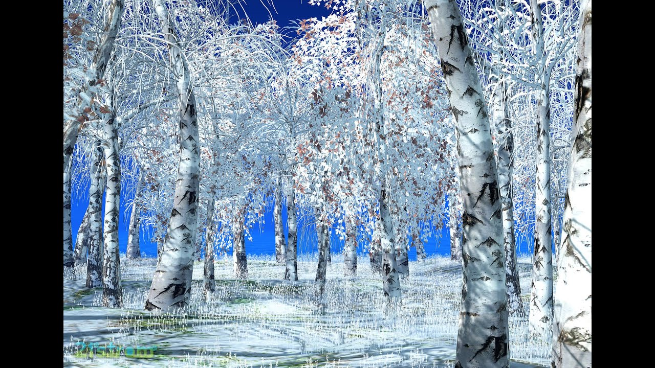 Birch trees in the winter stock photo image 2170700 - A Birch Trees Grove By A Sunny Winter Day Stock Photo Picture And