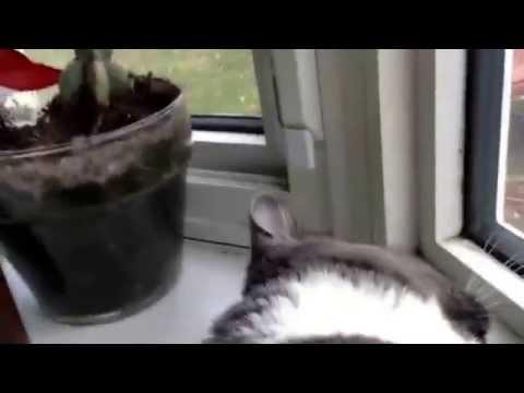 Funny cat videos #1