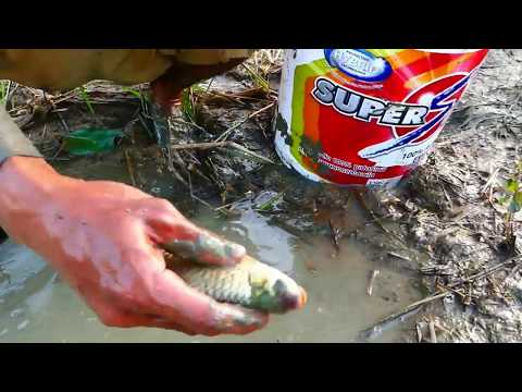 Wow Amazing Fishing Today! A Fisherman Catch Fish And Snails When Dry Water At Field