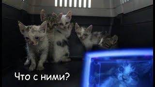 VLOG Что сказали ветеринары