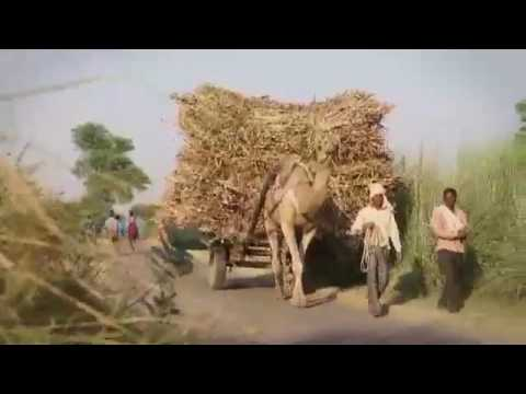 RURAL ELECTRIFICATION CORPORATION LIMITED  SHORT FILM