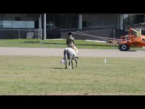 Imperial Muskrat at Macquarie Bank Hack Championships 2013