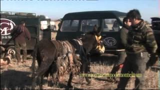Ojeo de Perdiz Roja, 40 ojeadores a Caballo, Coto de caza en Ciudad Real
