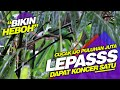 Heboh Habis Koncer Burung Lepas Di Gantangan  Mp3 - Mp4 Download