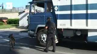 Detectados 42 inmigrantes en Ceuta durante la Operación Feriante thumbnail