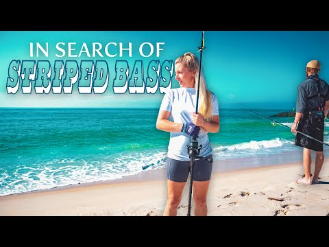 Surf Fishing In Search Of Striped Bass Long Island New York
