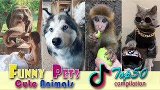 Funny Pets & Cute Animal Videos 😻 Top 50 Tik Tok Videos 💕 FUNtastic  #10