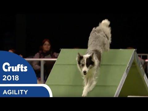 Agility  International Invitation  Large Agility Finals | Crufts 2018