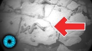 Marswurm - Leben auf dem Mars gefunden? -  NASA findet Spuren - Clixoom Science & Fiction