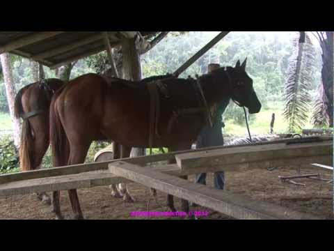 Horse powered saw mill, Belize