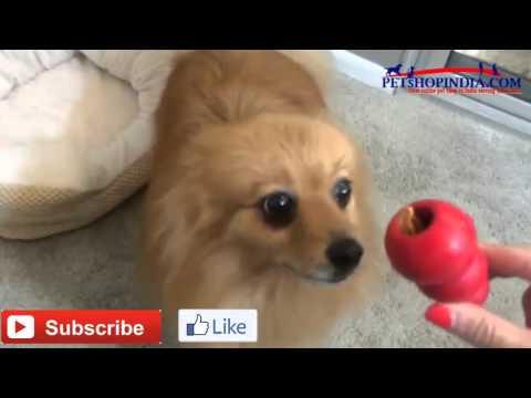 kong dog toy use , petshopindia