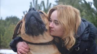 Южноафриканский бурбуль Тоша - охранная собака в социуме