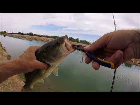BASS FISHING ARIZONA CANALS WITH WHOPPER PLOPPERS