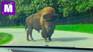 Париж День 6 идём в зоопарк Динозур Thory сафари на машине