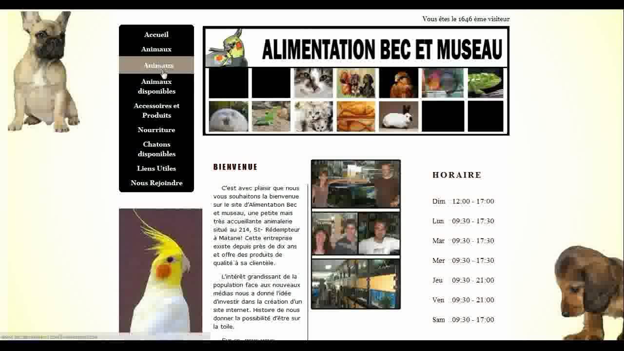 Site internet animalerie et salon de toilettage matane for Salon de toilettage montreal