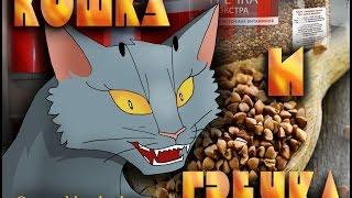 Мини мульт №1 Кошка и гречка