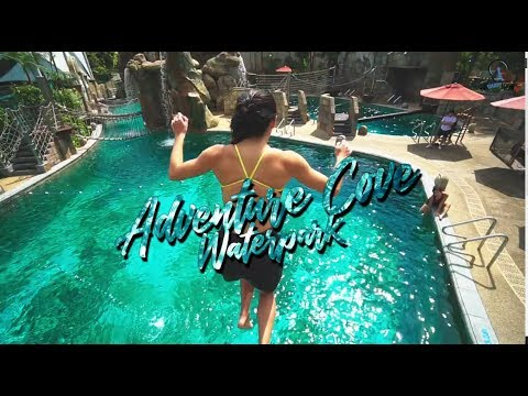 6 Must-Try Things At Adventure Cove Waterpark
