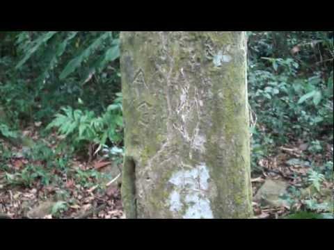 Square Trees - El Valle, Panama