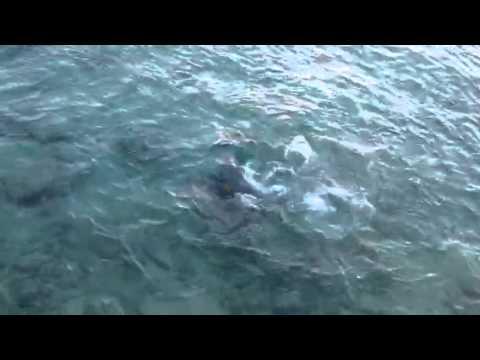 Shark feeding in the Bahamas
