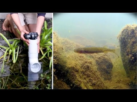 Making an Underwater Periscope for $10