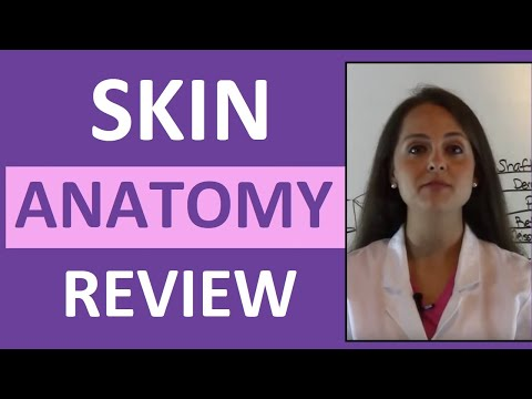 Anatomy & Physiology Integumentary Skin System Overview - YouTube