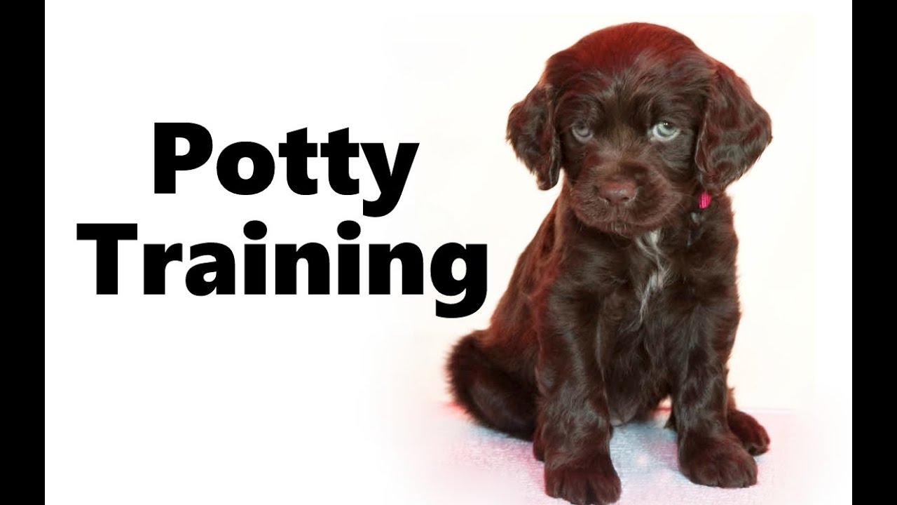 Male Or Female Dog House Training