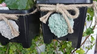 베란다정원 식물들을 두고 2주간 집을 비워도 되나? 폭…