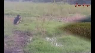 Berburu Burung Mandar Besar
