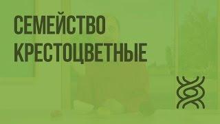 Семейство Крестоцветные(Пройти тест по теме: https://goo.gl/POCrXM Перейти к тренажерам: https://goo.gl/vRdQoV Домашнее задание от Домашней Школы InternetUro..., 2016-09-24T14:10:30.000Z)