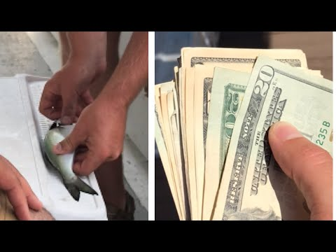 Tiny Fish Won Me All The Money On A Fishing Charter Boat!
