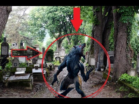 (Caught on Camera!) The Shape Shifter at Hoyt Cemetary