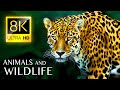 Superb ANIMALS Collection 8K ULTRA HD - Nature Sounds and Colorful Animals with Music 8K TV
