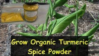 How to Grow Turmeric & Make it into Organic Powder Spice