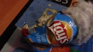 4paws Auditions For Lay's Salt & Vinegar Flavored Potato Chips Commercial