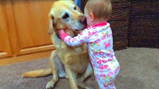 Cute Babies Playing With Dogs Compilation | Funny Baby And Pets