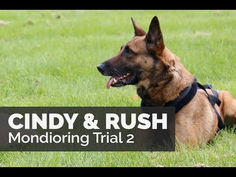 Cindy Rhodes and Rush Team Leerburg Mondioring 2 Trial