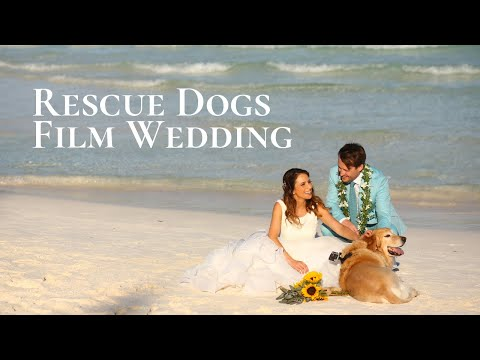Rescue Dogs Film Wedding with GoPro Cameras | Hotel Esencia